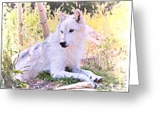 White Wolf Taking It Easy Greeting Card