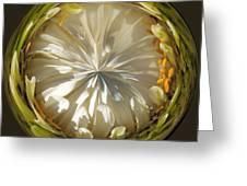 White Zinnia Button Greeting Card