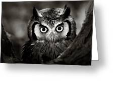 Whitefaced Owl Greeting Card