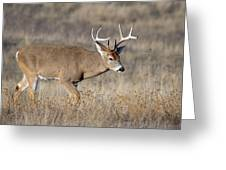Whitetail Buck On The Move Greeting Card