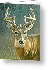 Whitetail Buck Greeting Card by Paul Krapf