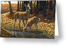 Whitetail Deer - Autumn Innocence 1 Greeting Card by Crista Forest