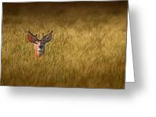 Whitetail Deer In Wheat Field Greeting Card