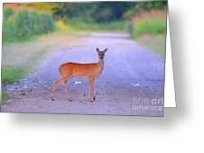 Whitetail Doe Greeting Card