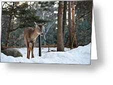 Whitetail In Woods Greeting Card