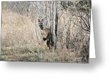 Whitetail Undercover Greeting Card