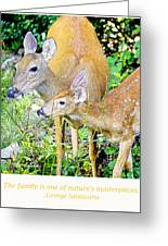 Whitetailed Deer Doe And Fawn Greeting Card