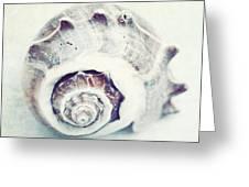 Whitewashed Seashell 92 Greeting Card