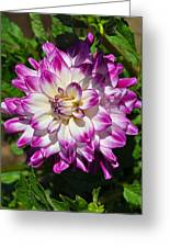 Who Dun It Dahlia Greeting Card