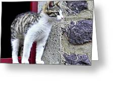 Who Goes There - Kitten Greeting Card