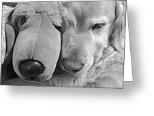 Who Has The Biggest Nose Golden Retriever Dog  Greeting Card