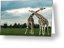 Who Is Taller Greeting Card