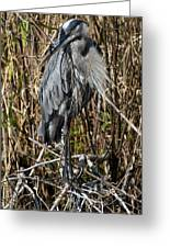 Who Is There - Great Blue Heron Greeting Card