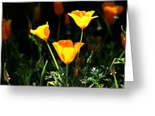 Who Is Ur Poppy Greeting Card