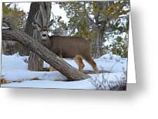 Who Me?  Oh Deer Greeting Card