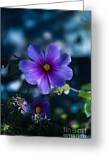 Who You Calling A Pansy? Greeting Card