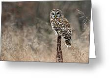 Whooo Goes There Greeting Card