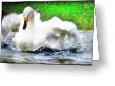 Whooper Swan Flutter Greeting Card