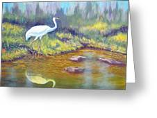 Whooping Crane - Searching For Frogs Greeting Card