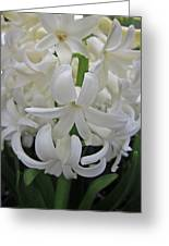 Whte Hyacinth Greeting Card