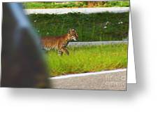 Why Did The Bobcat Cross The Road Greeting Card