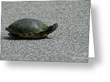 Why Did The Turtle Cross The Road Greeting Card