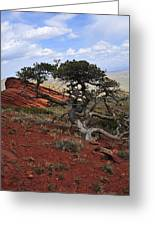 Wicked Tree And Red Rocks Greeting Card by Roger Snyder