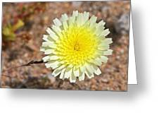 Wickiup Wild Flower Greeting Card