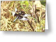 Widow Skimmer Greeting Card