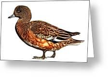 Wigeon Art - 7415 - Wb Greeting Card