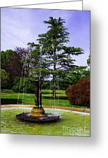 Wilcox Park Greeting Card