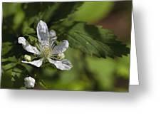 Wild Alabama Blackberry Blossom Greeting Card