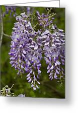 Wild Alabama Wisteria Frutescens Wildflowers Greeting Card