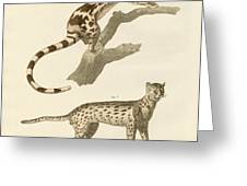 Wild Animals Greeting Card