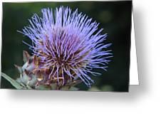 Wild Artichoke Flower Greeting Card