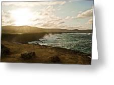 Wild Aruba Greeting Card