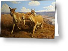 Wild Asses Greeting Card