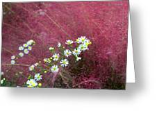 Wild Asters And Muhly Grass Greeting Card