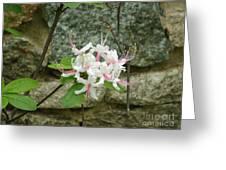 Wild Azalea Greeting Card by Katie Spicuzza