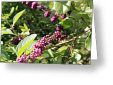 Wild Beautyberry Bush Greeting Card