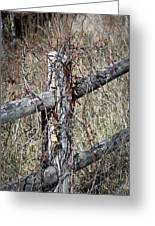 Wild Berries On Fence Greeting Card