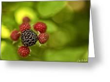 Wild Berries Greeting Card