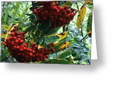 Wild Berry Greeting Card