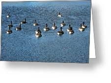Wild Birds And Pond Greeting Card
