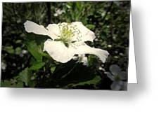 Wild Blackberry Blossom Greeting Card