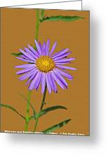 Wild Blue Aster Greeting Card