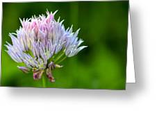 Wild Blue - Chive Blossom Greeting Card