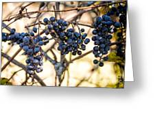 Wild Blue Grapes Greeting Card
