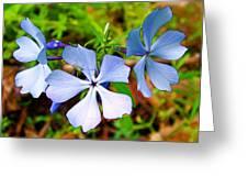 Wild Blue Phlox Near Hastings-michigan   Greeting Card