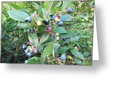 Wild Blueberry Bush Greeting Card